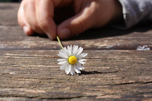 daisy-75190_1280.jpg