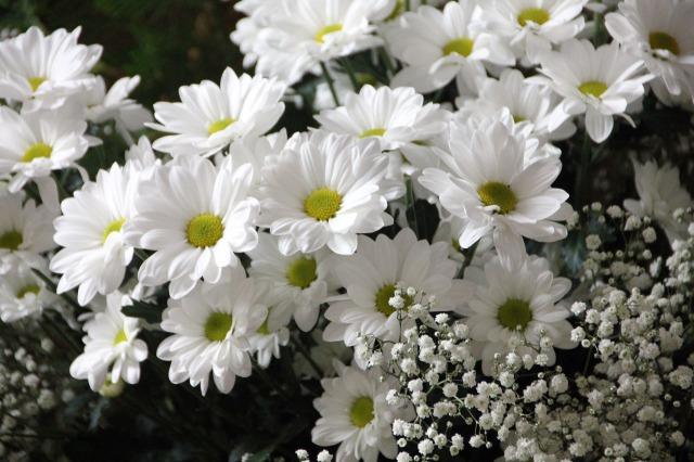 flowers-200602_1280.jpg