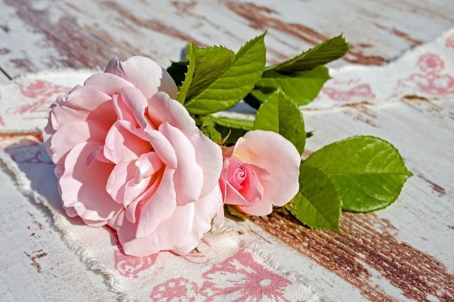 roses-2375469_1280.jpg