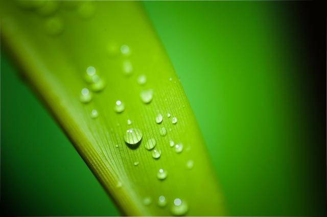 droplets-195838_1280.jpg