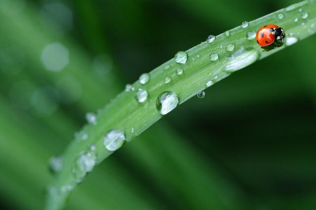 ladybug-574971_1280.jpg
