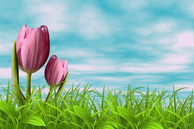 flowers-3159104_1280.jpg