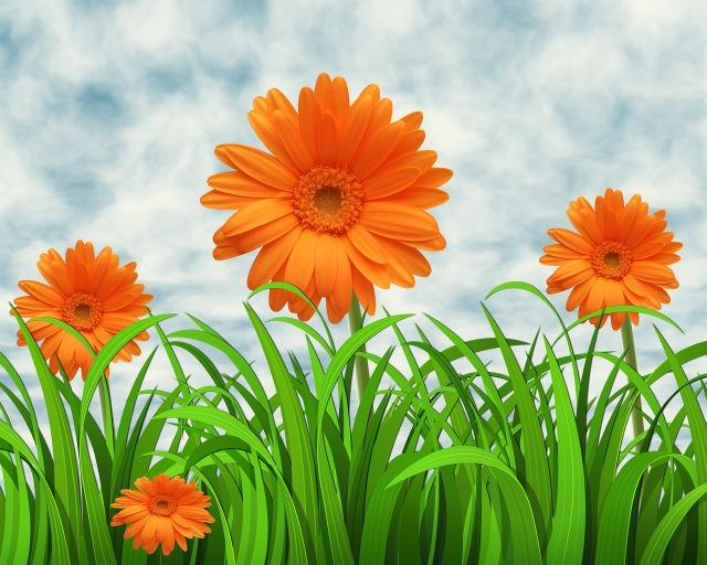 flowers-3160882_1280.jpg