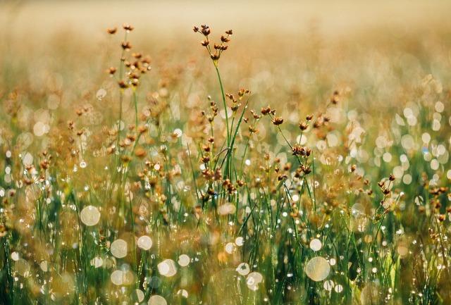 floral-865823_1280.jpg