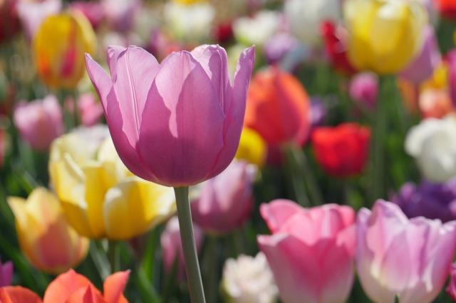 flower-3365603_1280.jpg