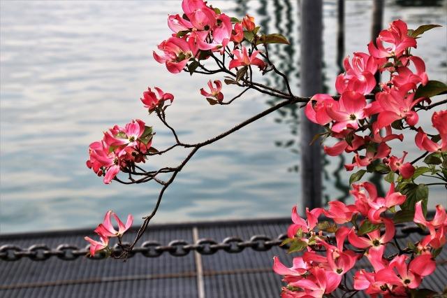 flower-3373945_1280.jpg