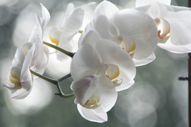 orchid-4779_1280.jpg