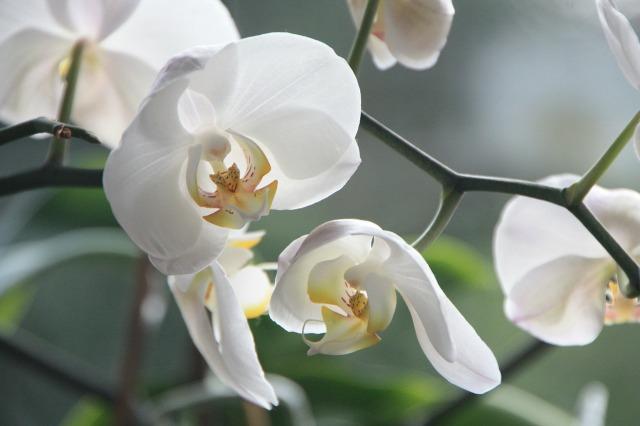 orchid-4780_1280.jpg