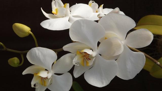 orquidea-188633_1280 (2).jpg