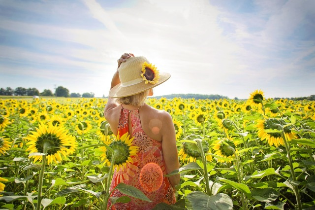 sunflowers-3640935_1280.jpg