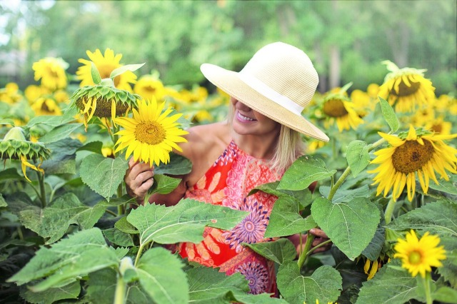 sunflowers-3640936_1280.jpg