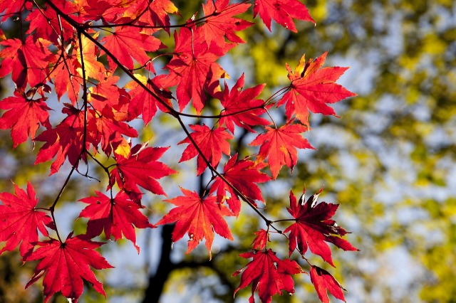 autumn-leaves-2789234_1280.jpg