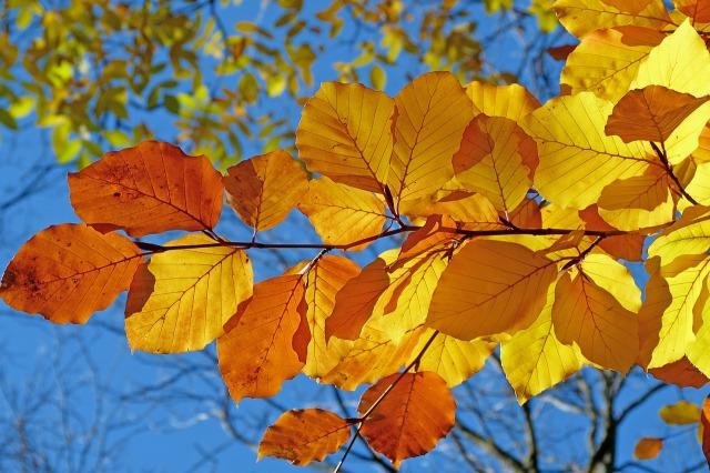 foliage-539413_1280.jpg