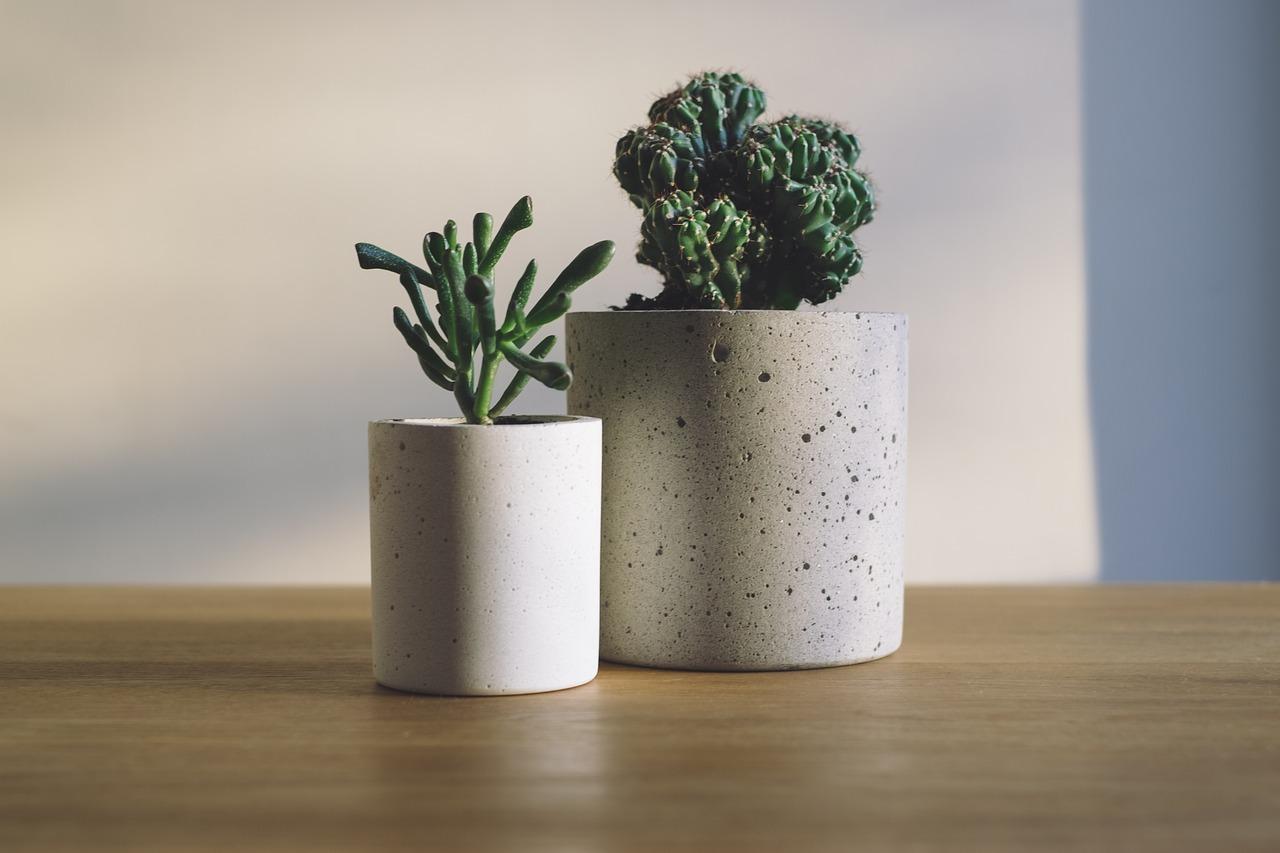 cactus-1842260_1280.jpg